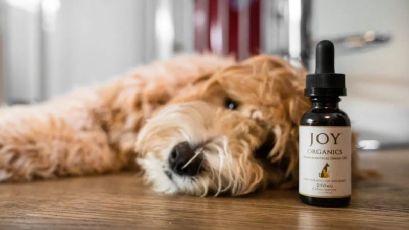 What Is Right Time To Give CBD Oil To Your Pet?